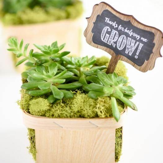 Succulent Planter Best Mothers Day DIY Homemade Crafting Gift Ideas Inspiration How To Make Tutorials Recipes Gifts To Make