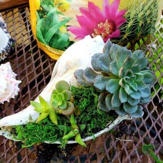 Succulent in Seashell Sister Mothers Day DIY Homemade Crafting Gift Ideas Inspiration How To Make Tutorials Recipes Gifts To Make